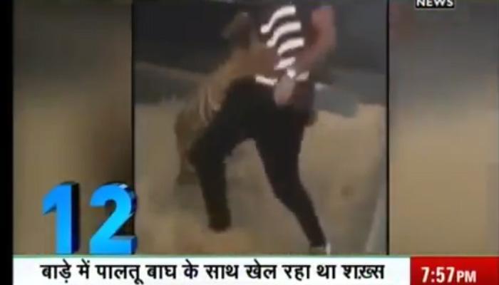 सऊदी अरब में एक व्यक्ति को बाघ से खेलना महंगा पड़ गया, देखें VIDEO