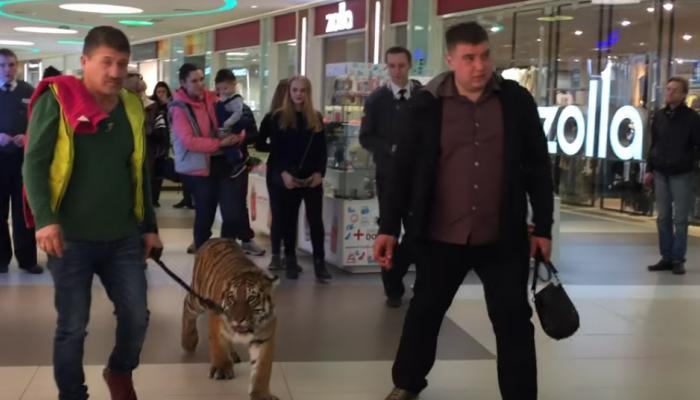 शॉपिंग मॉल में बाघ को टहलता देख आप भी हो जाएंगे हैरान, देखें Video