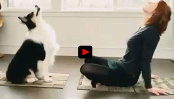 कुत्ता भी करता है योगा, यकीन नहीं होता तो देख लीजिए ये VIDEO