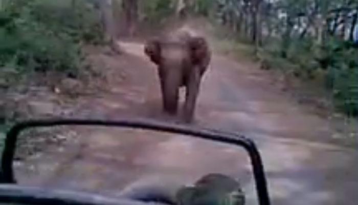 जब सैलानियों के पीछे पड़ गया एक हाथी, वीडियो देखकर आपकी भी फूल जाएंगी सांसें