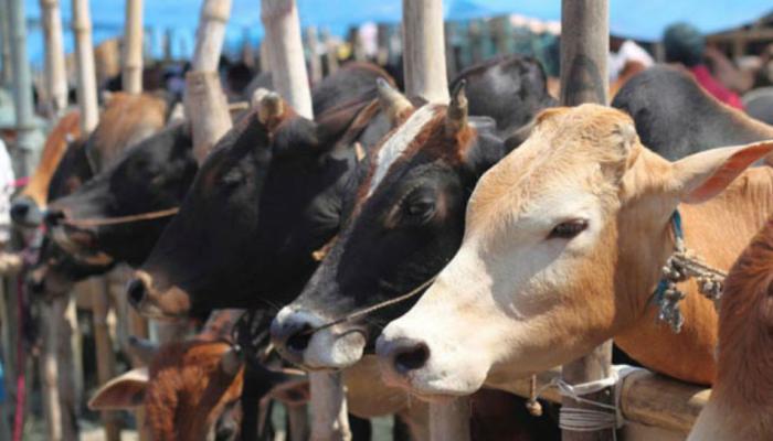 एक हफ्ते  में 173 गायों की मौत के आरोपों के बीच 9 अधिकारी सस्पेंड