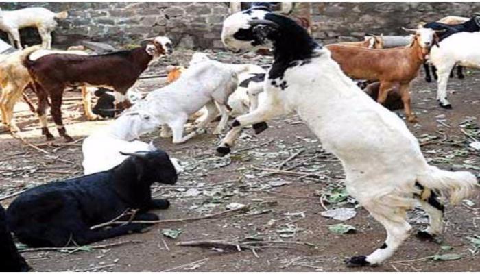 बकरीद पर कुर्बानी के खिलाफ खड़ा हुआ मुस्लिम समाज, जानिए पूरा माजरा