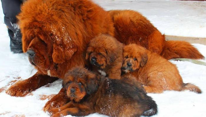 25 लाख तक की कीमत वाले कुत्ते यहां सड़कों पर घूम रहे हैं लावारिस