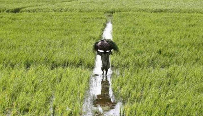 एसोचैम ने कहा, बजट में कृषि क्षेत्र को सर्वोच्च प्राथमिकता दे मोदी सरकार