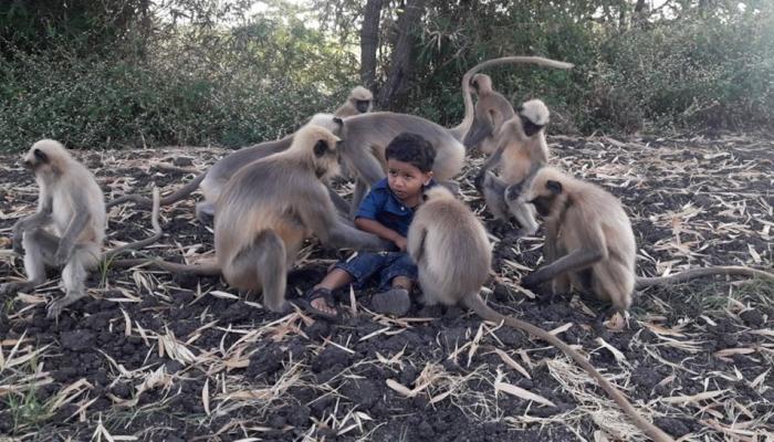 कर्नाटक: दो साल के बच्चे का बंदरों से चौंकाने वाला रिश्ता, दूर-दूर से देखने आ रहे लोग