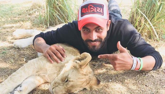 हार भुलाकर टीम इंडिया गई सफारी पर, सर जडेजा ने लिखा 'शेर तो शेर होता है'