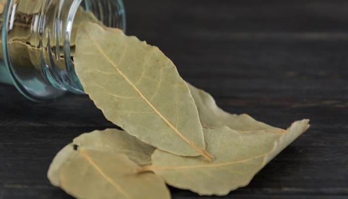 benefits of spices bay leaf in hindi | सिर्फ एक तेज पत्ता रोज खाएं, असर देखकर हैरान रह जाएंगे आप