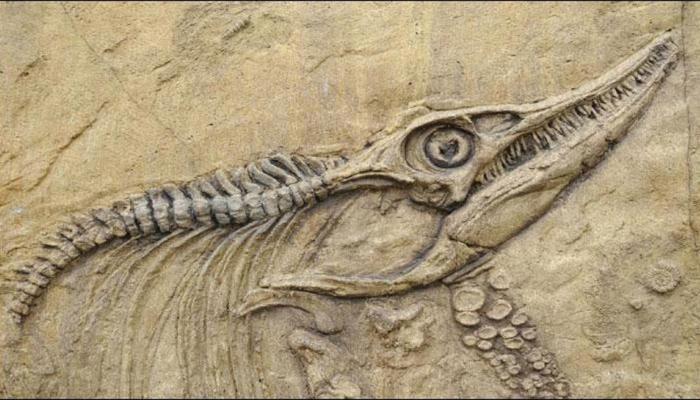 23 करोड़ वर्ष पहले डायनासोर का होने लगा था विस्तार, शोध में हुआ खुलासा