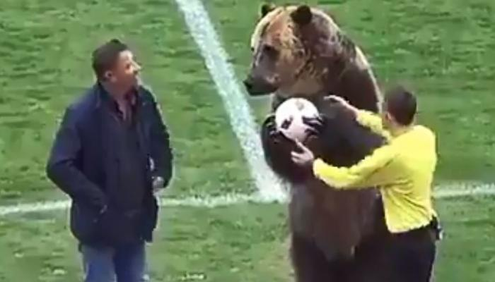 VIDEO : भालू ने दिखाए फुटबॉल के मैदान पर 'करतब' तो पशुप्रेमी हुए नाराज