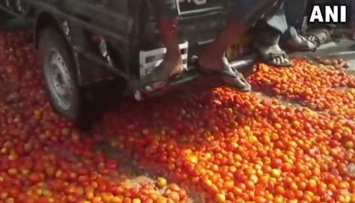 लागत भी नहीं मिलने से परेशान किसान सड़कों पर फेंके रहे हैं टमाटर