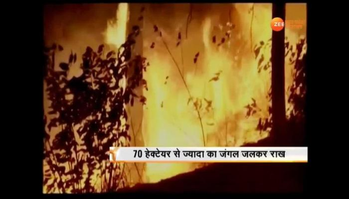 Video: forest fire in uttarakhand
