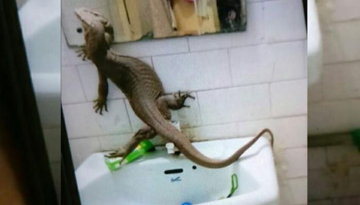 दिल्ली: गर्ल्स हॉस्टल के बाथरूम में मिली ऐसी छिपकली, देखकर आपके भी रोंगटे खड़े हो जाएंगे