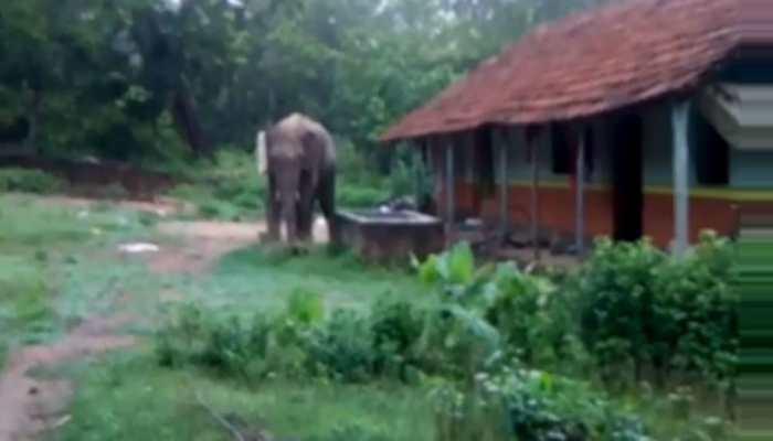 जंगली हाथियों के आने से ग्रामीणों में दहशत, मची अफरातफरी