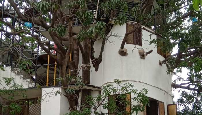 This man made a four-storey tree house on the mango tree, see photos