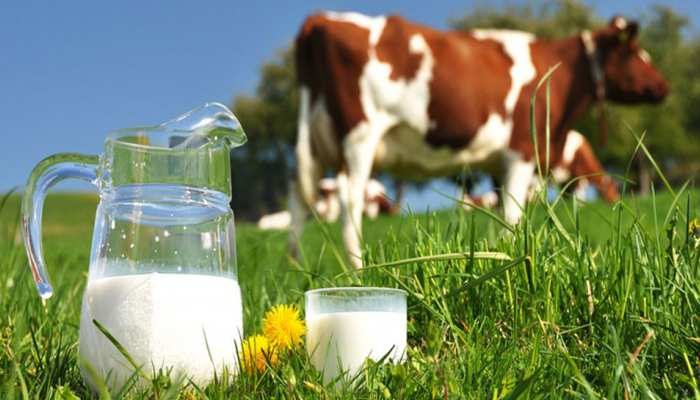 COW Milk से भी ज्यादा फायदेमंद होता है यह दूध...