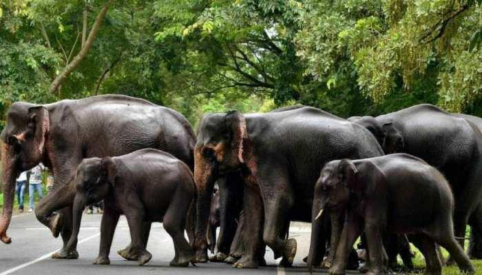 सिमडेगा: गांव में घुस आए हाथी, फसलों और घरों को किया क्षतिग्रस्त