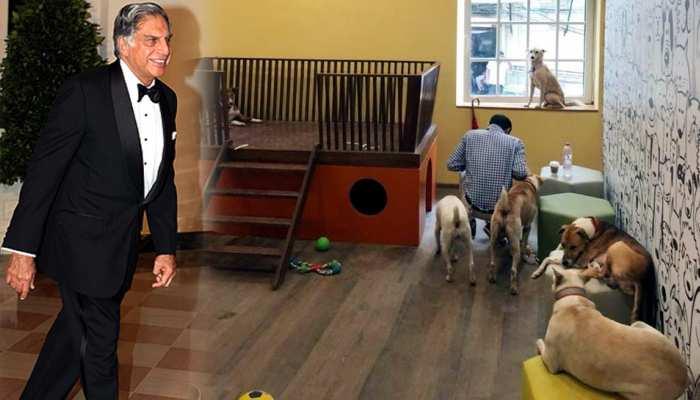 रतन टाटा ने ग्रुप हेडक्वॉर्टर में 'आवारा' कुत्तों के लिए बनवाया घर, मिलेंगी ये लग्जरी सुविधाएं