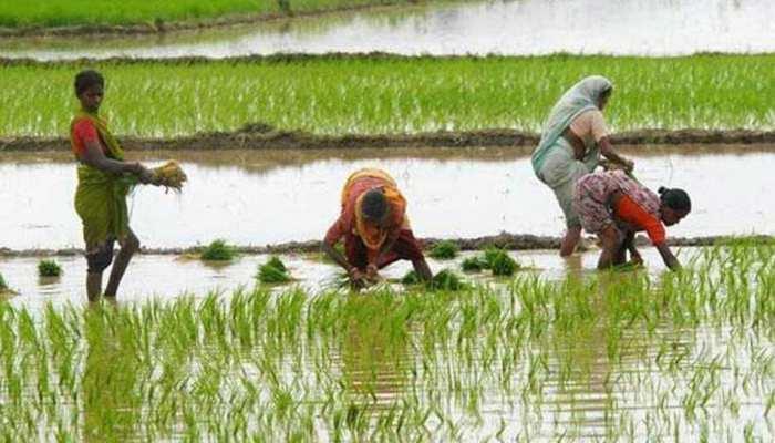 देशभर में 925 लाख हेक्टेयर में खरीफ फसलों की बुवाई