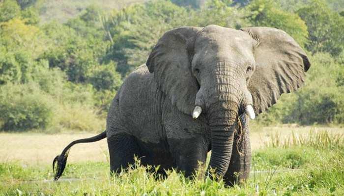 छत्तीसगढ़ः हाथियों ने ली ग्रामीण की जान, शव के किये कई टुकड़े