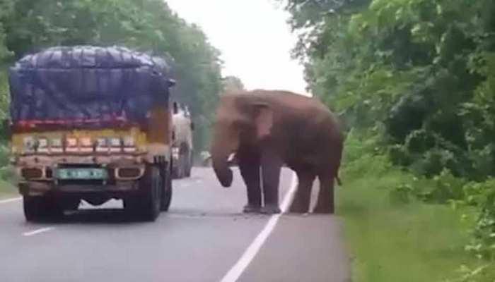 रेलवे और राजमार्ग जैसे बुनियादी ढांचों से है हाथियों को खतरा : अंतर्राष्ट्रीय संगठन