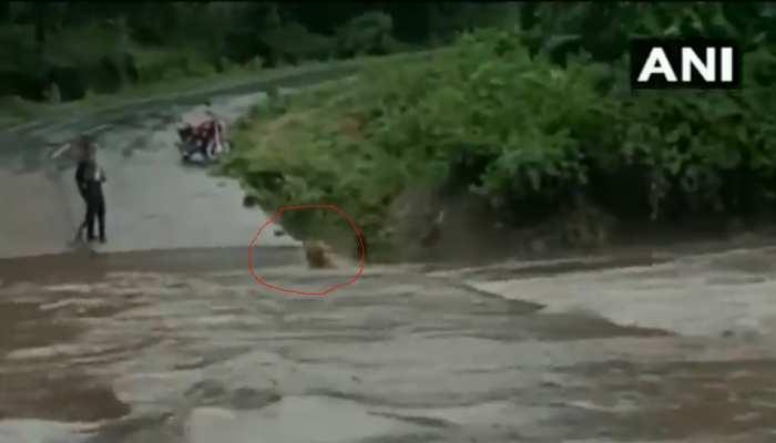 VIDEO: बाढ़ में फंसे दो कुत्ते, 1 बचकर बाहर निकला