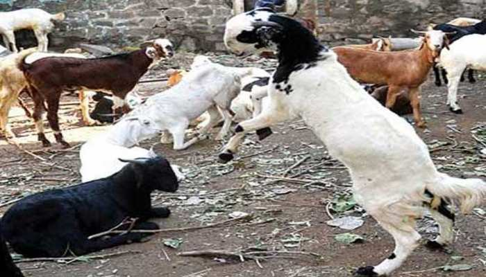 भारत में 22 अगस्त को मनाई जाएगी बकरीद, कमेटियों में बनी तारीख पर सहमति