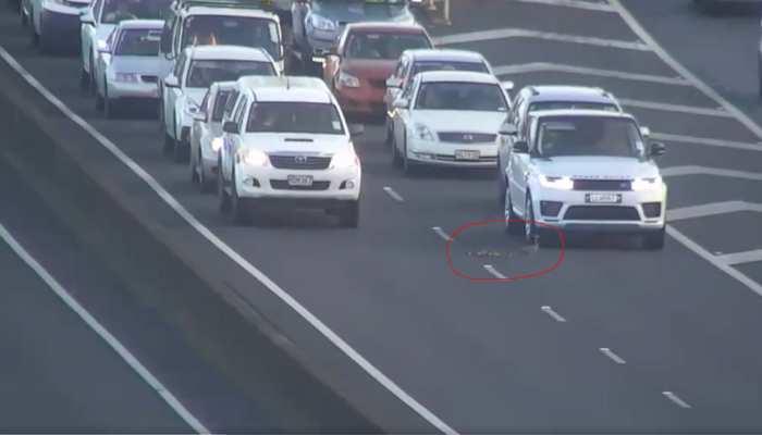 Video: जब बीच सड़क आ गए खास मेहमान, रुक गई सभी गाड़ियां