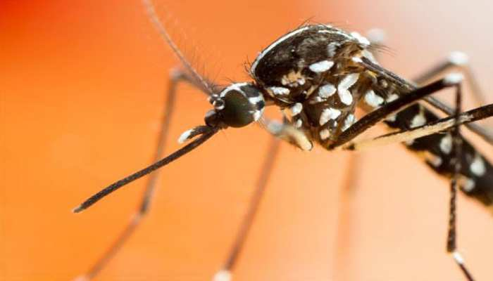 NASA's machine will save you from mosquito sting, technology developed after long research