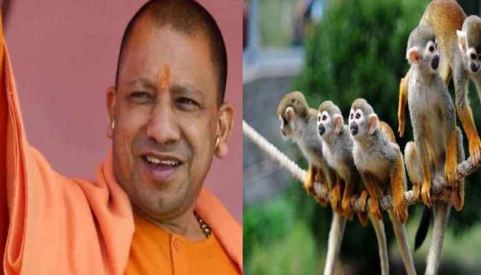 बंदरों से परेशान मथुरावासियों को सीएम योगी ने दिया खास मंत्र, जानिए