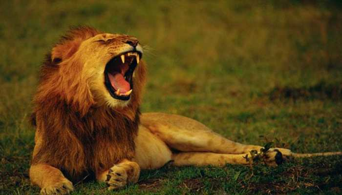These wildlife destinations of India are the best for you