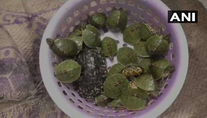कालका-हावड़ा एक्सप्रेस में संग्दिध बोरा मिलने से मचा हड़कंप, तलाशी में मिले 50 कछुए