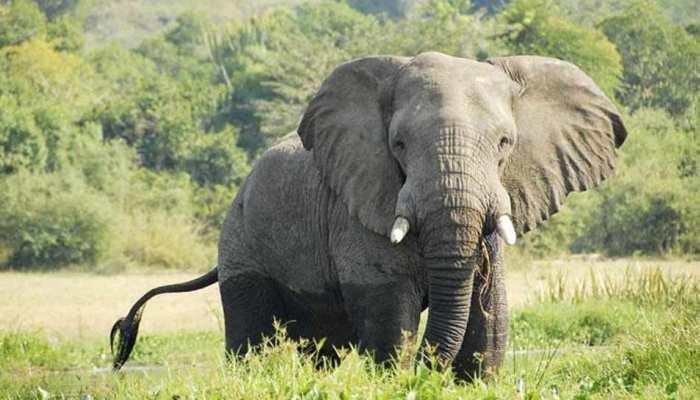 छत्तीसगढ़ : जंगल में हाथियों के झुंड के साथ सेल्फी ले रहा था युवक, हाथी ने कुचला