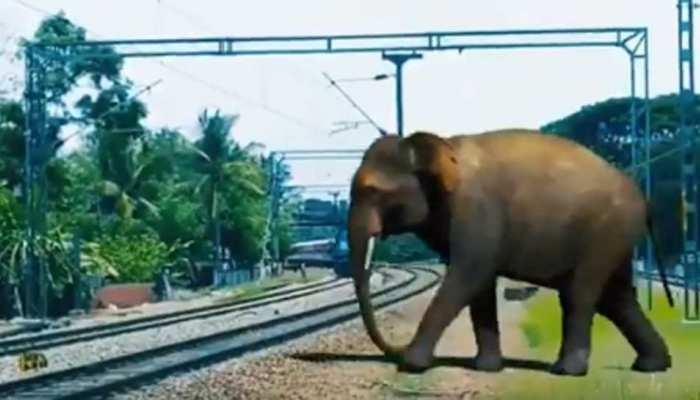 राजाजी नेशनल पार्क के रेल हादसे बचाएंगी मधुमक्खियां, रेलवे ने किया ये इंतजाम
