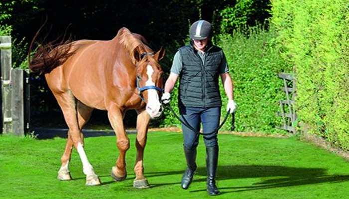 ब्रिटेन में दृष्टिहीन भारतीय को सहारा देगा घोड़ा, पहली बार होगा ऐसा