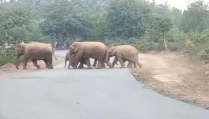 चतरा: हाथियों से परेशान हुआ दर्जनों गांव, फसल और कच्चे मकानों को किया बर्बाद