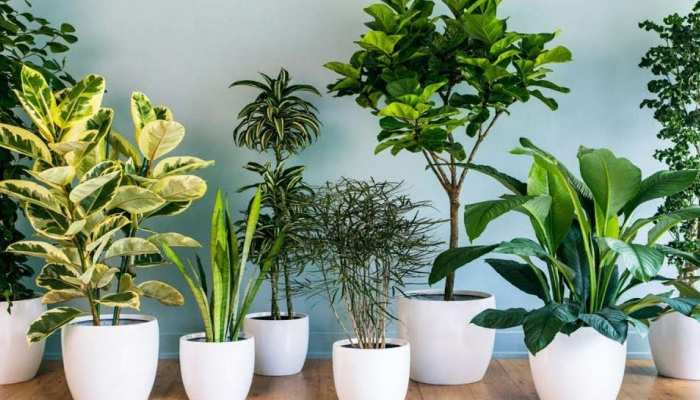 indoor plants that purify the air around you naturally Lifestyle