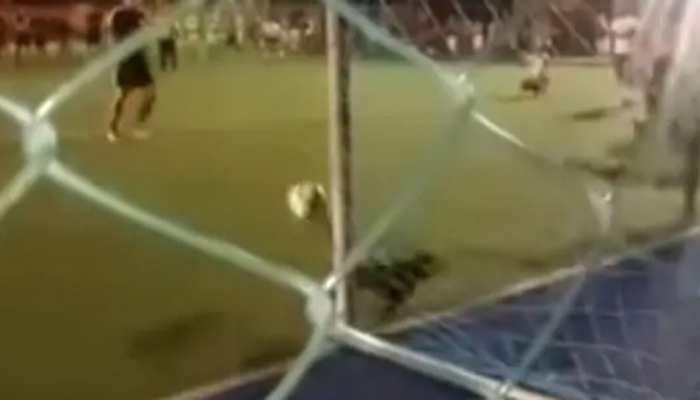 VIDEO: जब कुत्ते ने रोकी पेनल्टी किक, हंस-हंस के हो जाएंगे लोटपोट