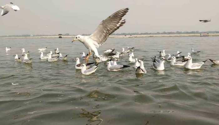 Photos: Siberian birds reached Varanasi