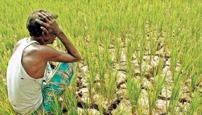 राजस्थान: कर्ज माफी समिति की सिफारिश, किसानों का पूरा लोन माफ करे सरकार