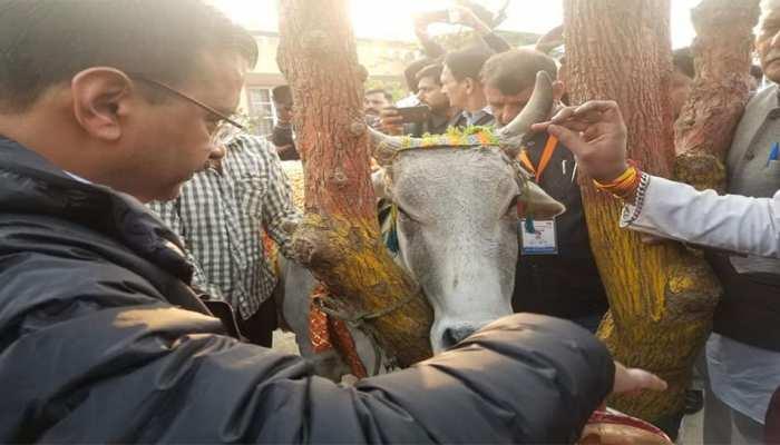 जो गाय के नाम पर वोट मांगते हैं, उन्हें गायों को चारा भी देना चाहिए : केजरीवाल
