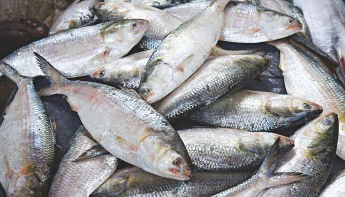 बिहार में आंध्र प्रदेश-बंगाल की मछली पर रोक, 15 दिनों तक नहीं होगी बिक्री
