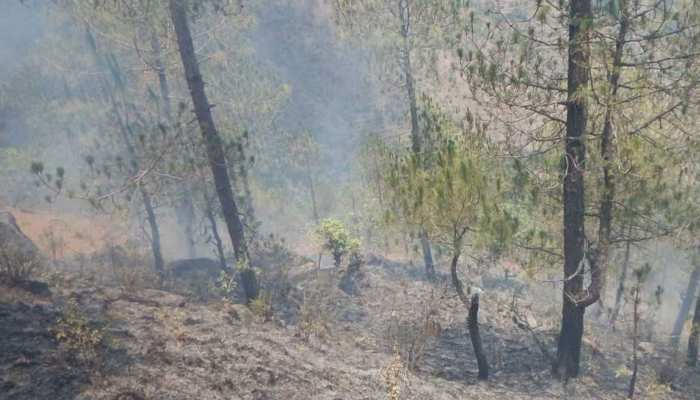 Indian Forest Survey launches new version of forest fire alert system in forests