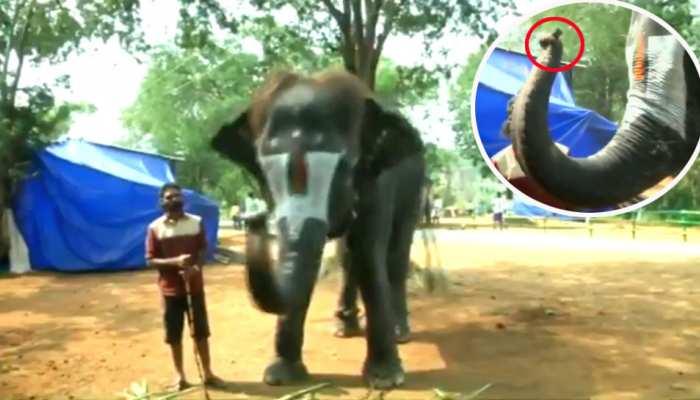 'लक्ष्मी' अपनी सूंड से बजाती है 'माउथ ऑर्गन', VIDEO देख आप भी दबा लेंगे दांतों तले उंगली