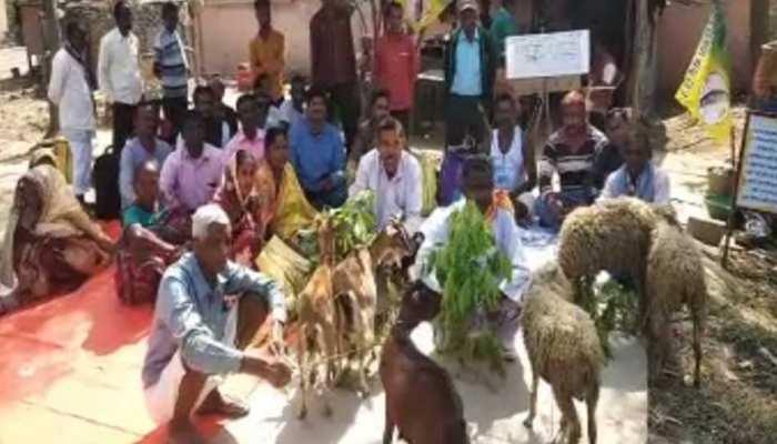 घाटशिला: भेड़-बकरियों के हक के लिए धरने पर बैठा शख्स, लोगों के लिए बना कौतूहल का विषय