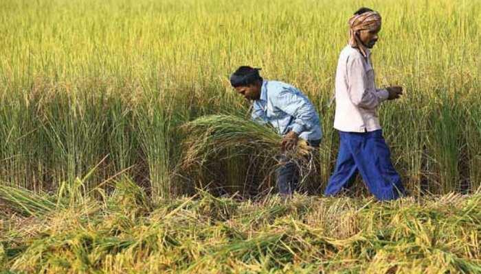 राजस्थान में कर्जमाफी के लिए बायोमेट्रिक सिस्टम से जुड़े 15 लाख किसान