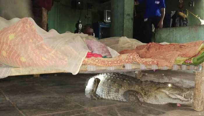 Gujarat Anand: When a farmer found a crocodile under his bed at night