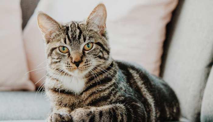 'बिल्ली को घर के अंदर ही रखें, उनके स्वास्थ्य और आपके लिए रहेगा अच्छा'