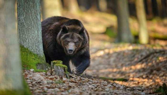 लोहरदगा: भालू के हमले से एक शख्स की मौत, एक की हालत गंभीर