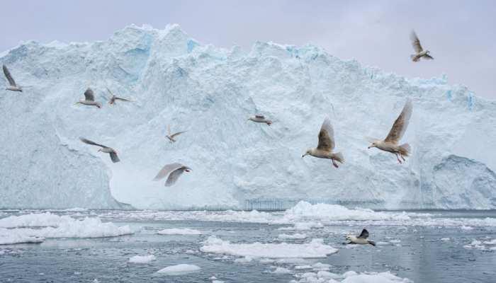आर्कटिक पर कब्जा जमाना चाहते हैं चीन और रूस, अमेरिका ने दी चेतावनी अगर ऐसा किया तो...