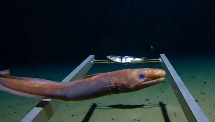 क्या आपने समुद्र के 11KM नीचे का जलजीवन देखा है? नहीं तो देखें यह VIDEO, खड़े हो जाएंगे रोंगटे